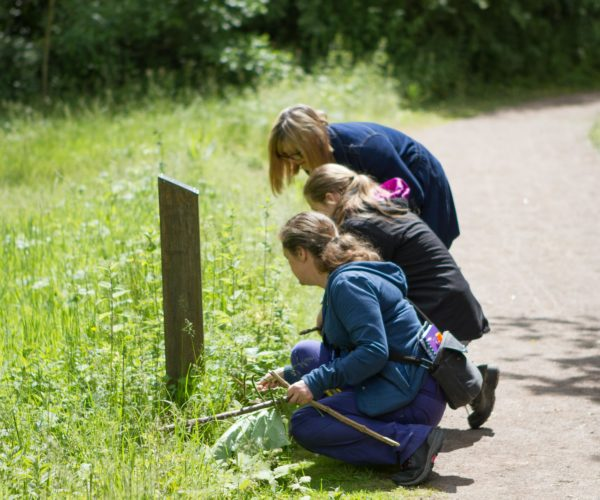 Three people looking at plants next to footpath